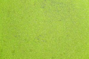 A spirulina alga tabletta előnyei és jótékony hatásai